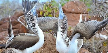 Combiné Equateur-Galapagos 19J/18N