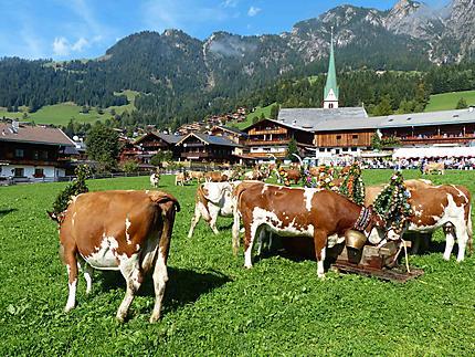 Alpbach - Vaches après la transhumance