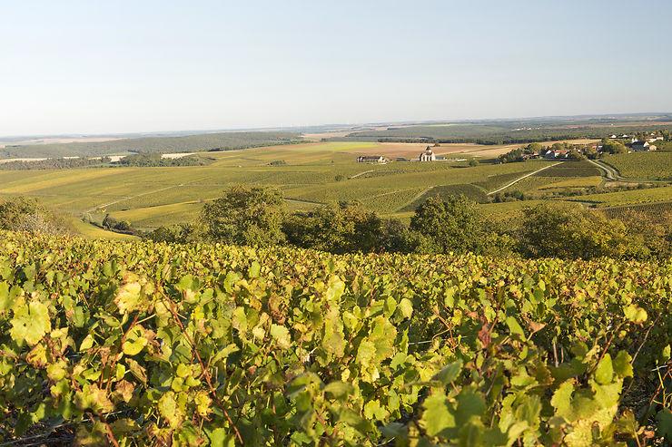 Auxerre et Chablis : l'Yonne, de vignobles en châteaux