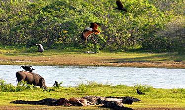 Parc national de Yala