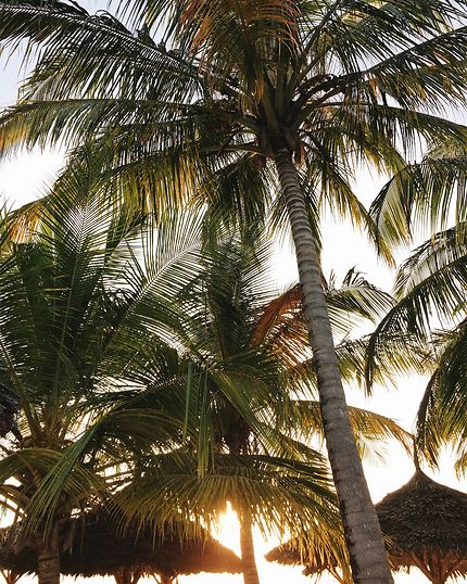 Palm trees obsession