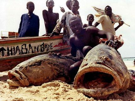 Retour de pêche au Sénégal