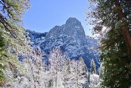 Arbres cristallisés à Yosemite