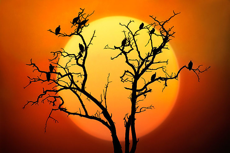 Coucher de soleil, Parc National de Chobe, Botswana