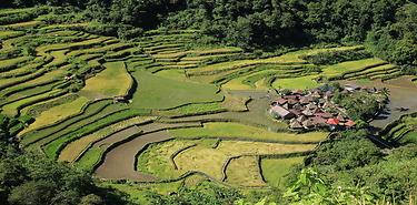 Philippines : entre rizières et plages 11J/10N