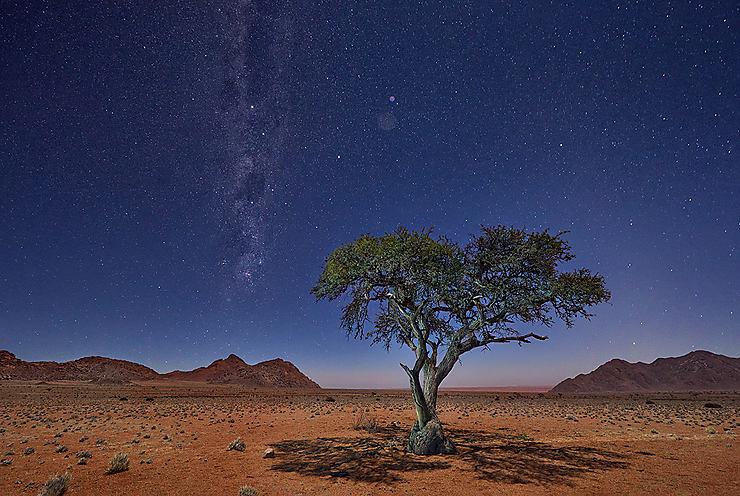 Arbre solitaire sous la voie lactée, Namibie