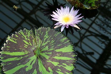 Fraicheur aux Kew Gardens