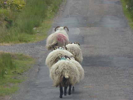 Bouchon dans les Highlands, à Red Point
