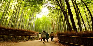 Circuit Japon Explore