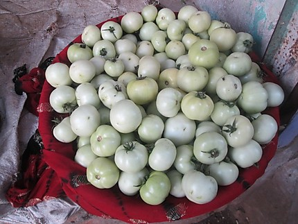 Tomates blanches