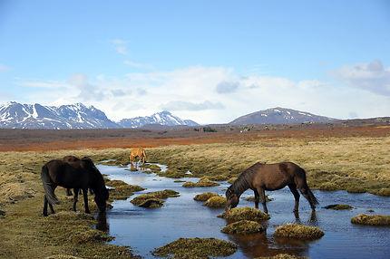 Sur la piste de Brúarárfoss