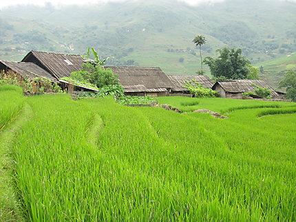 Sapa et ses rizières