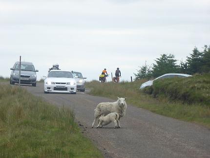 Dans les Highlands, route à Durness