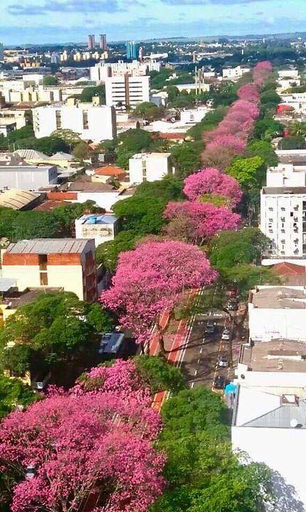 Le printemps chez mon frère à Belo Horizonte