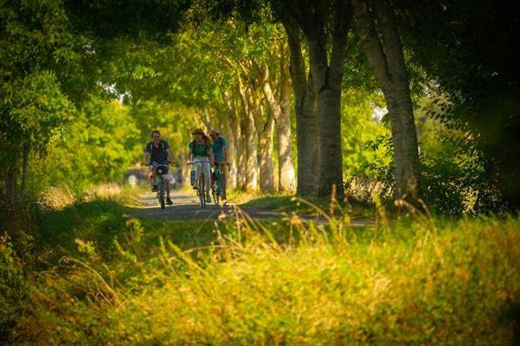 Cyclisme - La Vélobuissonnière, 250 km à vélo entre Alençon et Saumur