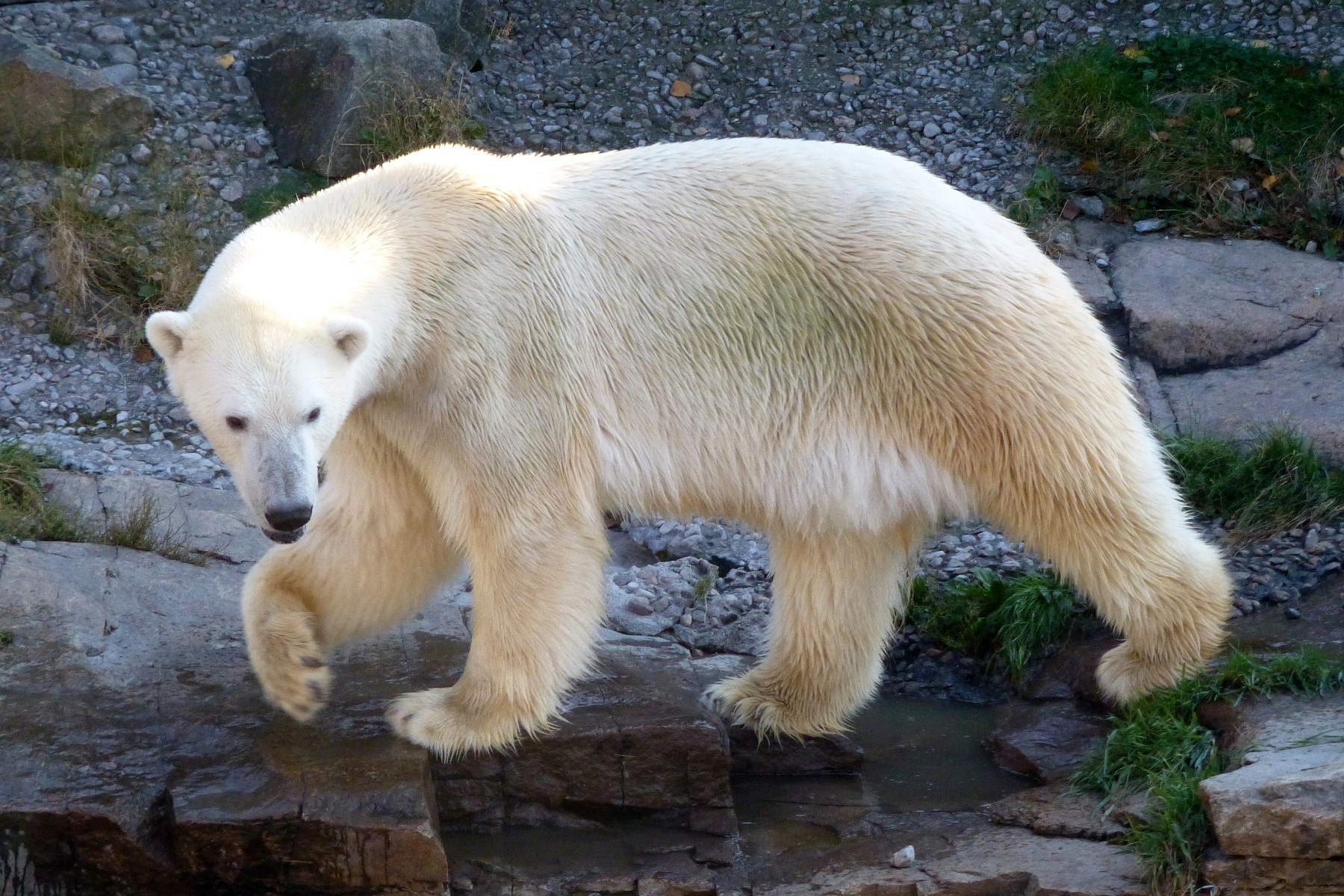 Zoo sauvage de Saint-Félicien - Québec