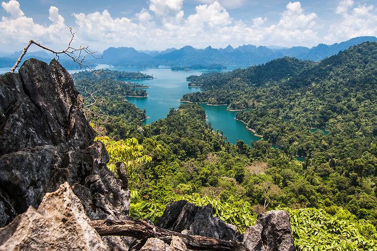 Une jungle vieille de 160 millions d'années