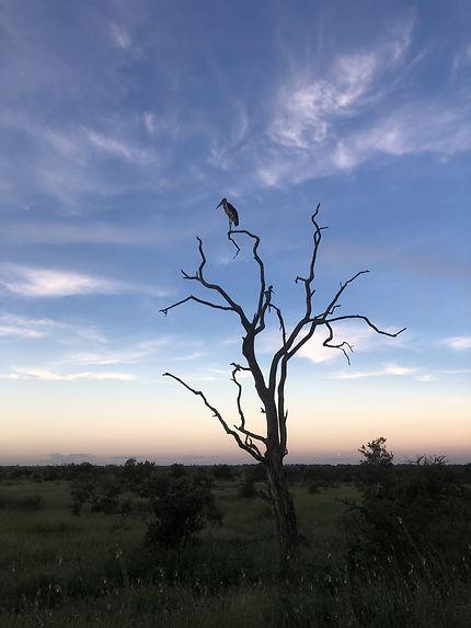 Coucher de soleil d'Afrique du Sud