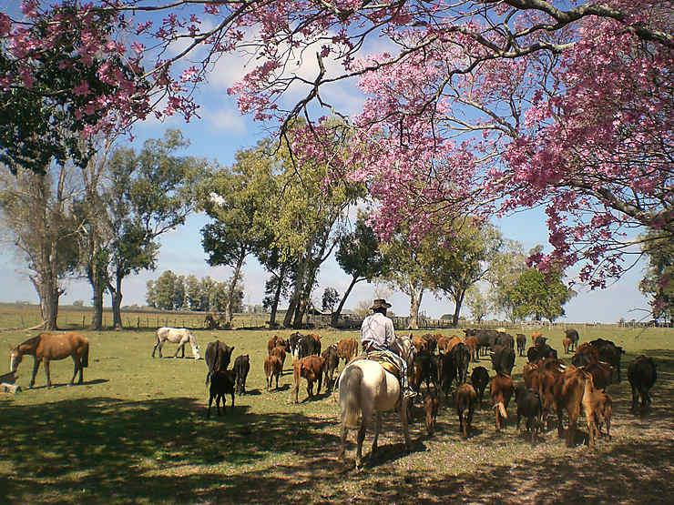 Séjourner dans une estancia de la Pampa et partager la vie des gauchos