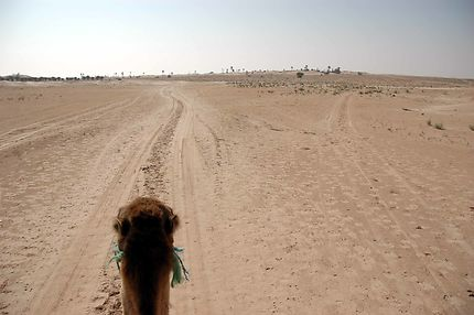 Au pas du dromadaire, Zaafrane, Tunisie