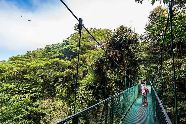 Trois parcs au Costa Rica : Monteverde, Tenorio, Palo Verde