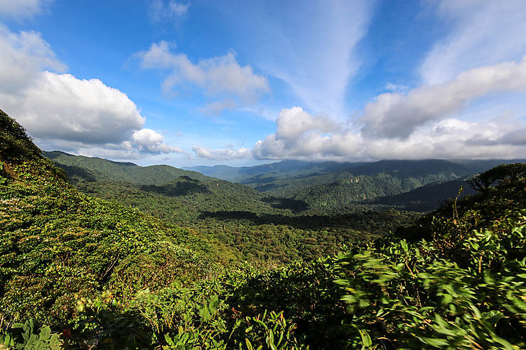 Monteverde : au cœur de la forêt de nuages