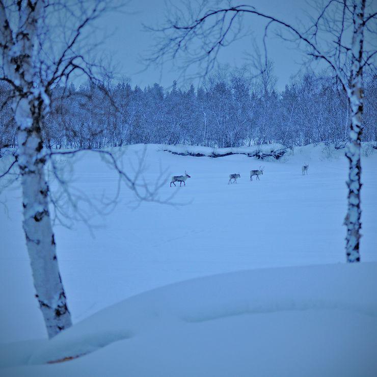 En correspondance, près du lac Inari, Finlande