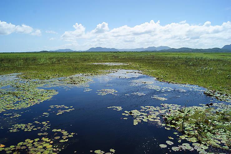 Palo Verde : comme un air d'Amazonie