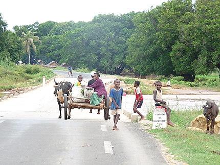 Scène de vie à Madagascar