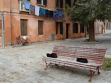 Un coin tranquille dans la folie Vénitienne