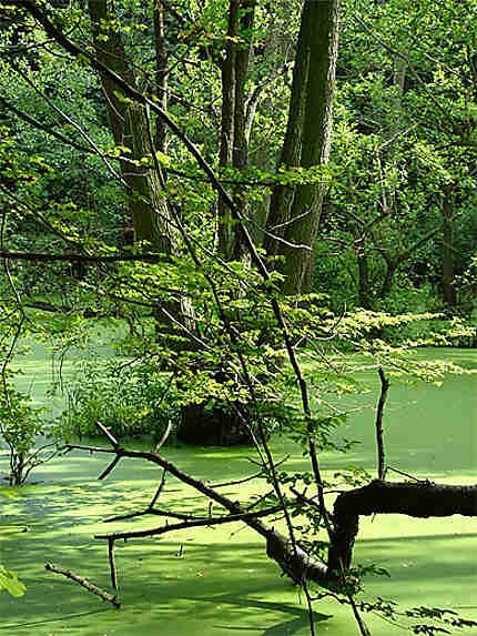 Forêt Ile de Rugen