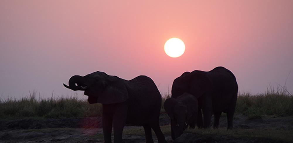 Retour de 3 semaines Chutes Victoria-Botswana-Namibie