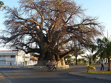 Baobab à Majunga
