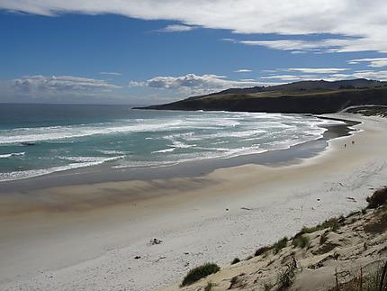 La plage de Sandfly Bay sur la Péninsule d'Otago