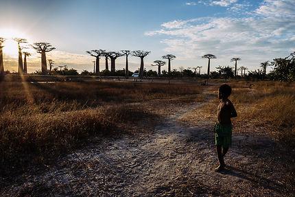 Coucher de soleil sous les baobas