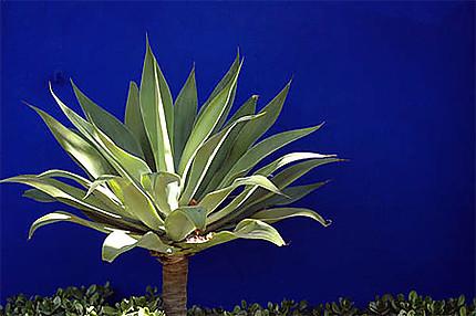 Cactus sur fond bleu