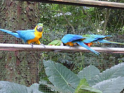 Parc aux oiseaux multicolores