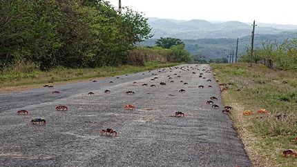 Migration sur les routes cubaines