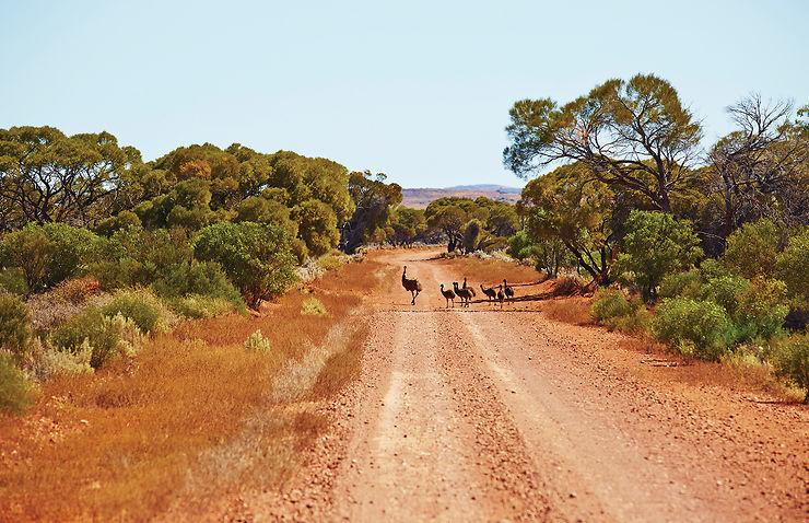 Emeus, Flinders Ranges, Australie du Sud