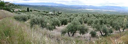 La Mancha - Pays des oliviers