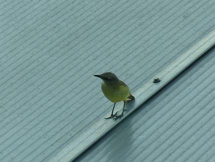 Oiseau de l'aéroport