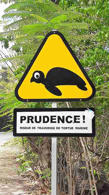 Traversée de tortues marines