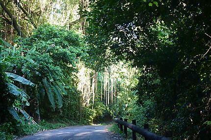 Les routes sauvages autour du Mont Pelé