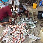 Retour de pêche journalier à beau Vallon