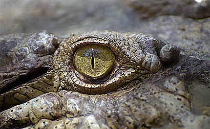 Dans l'oeil du Crocodile