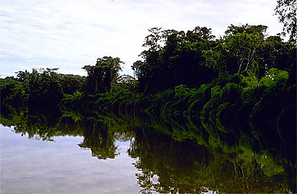 Fleuve de Guyane