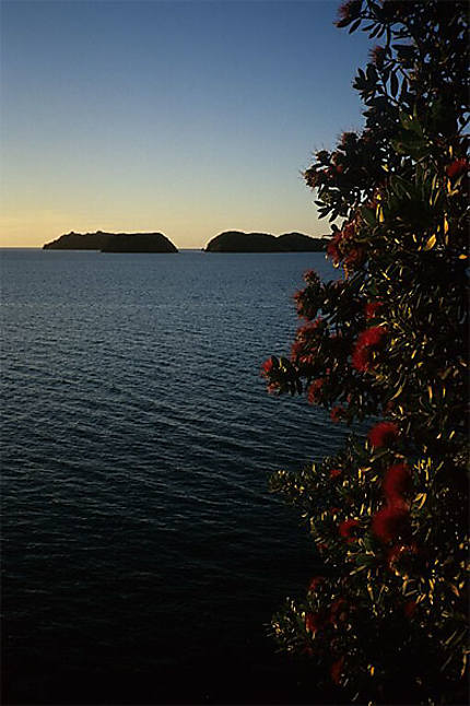 Pohutukawa au coucher du soleil