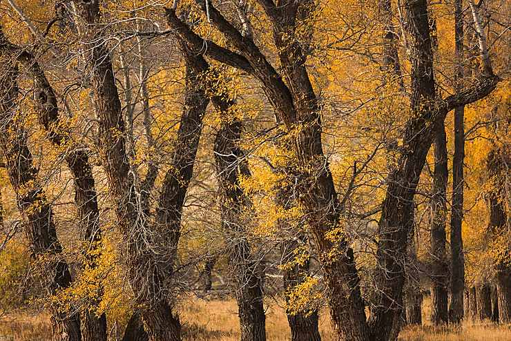Feuillage d'automne, Lamar Valley, Yellowstone National Park, Wyoming