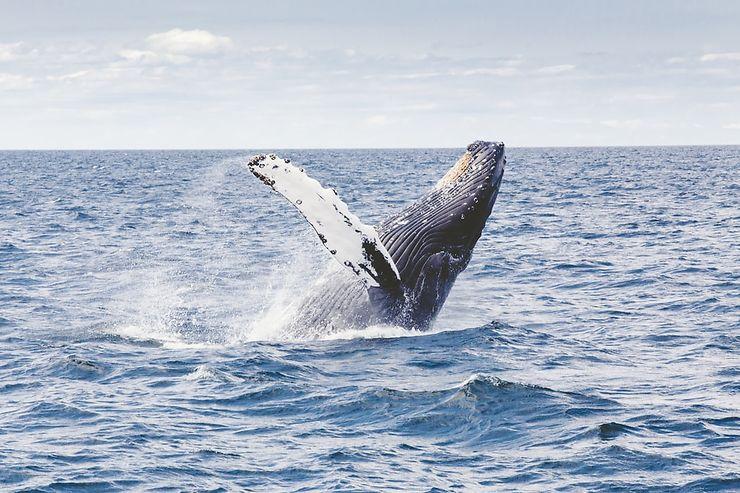 États-Unis - Whale Trail : sur les traces des baleines dans le Massachusetts