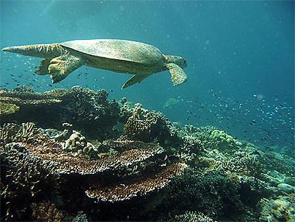 Récif de Sipadan